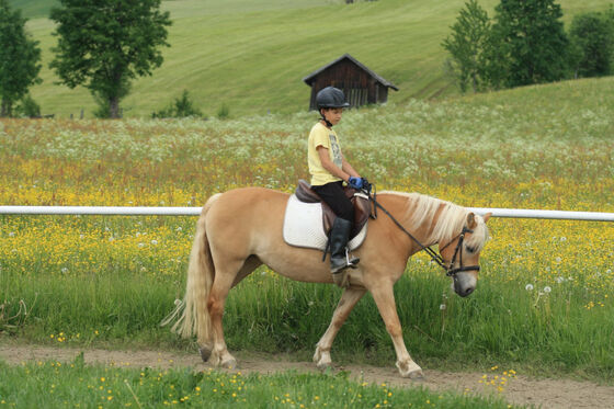 Family vacation with inclusive horse riding at Felsenhof